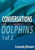 Conversations with Dolphins I