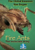 Fire Ants The Invincible Army