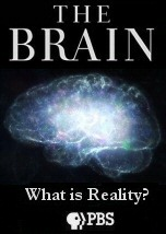 The Brain What is Reality
